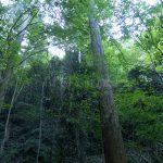 見渡す限りの森