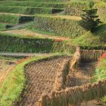 収穫後の田と棚田