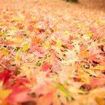 秋を探しに行こう!