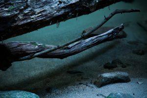 水底に映る影を表現したかったのに、反射を完全に除去してしまって水なんて存在しない雰囲気に……