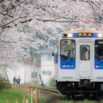 桜を求めて【松浦鉄道】