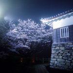 桜を求めて【平戸城】